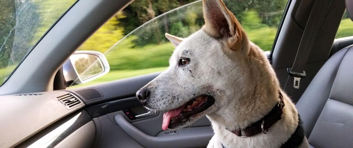 Laat je hond, of kind met warm weer nooit achter in de auto